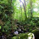 Forest Carbon Emissions Decline With Reduced Deforestation
