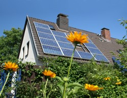 rooftop-solar-sunflower.jpg