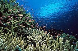 Marine Scientists Call for Sharper CO2 Emissions Cuts to Slow Ocean Acidification