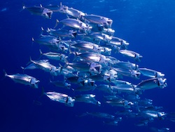 State of the Oceans report sends stark warning for health of marine ecosystems