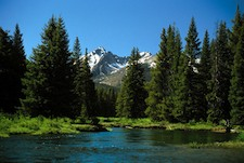 According to The Wilderness Society, American forests capture about one-tenth of the greenhouse gases put out by U.S. cars, factories and other sources. Pictured: Rocky Mountain National Park in Colorado.ational Park, Colorado