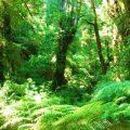 Valdivia Rain Forest