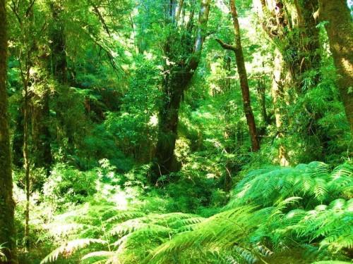 EU Funds Chile-Argentina Temperate Rain Forest Conservation Program
