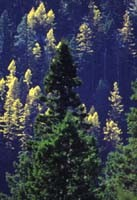 Forests across North America are under increasing threats from climate change
