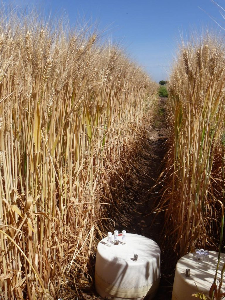 New Method for Measuring N2O Emissions Can Help Address Food Security, Emissions Challenges