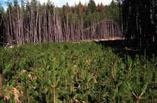 The Benefits of Reforestation