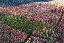 Western, Eastern Forests Increasingly Under Threat from Climate Change