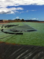 Aurora Algae seeks to scale up biofuel and food production