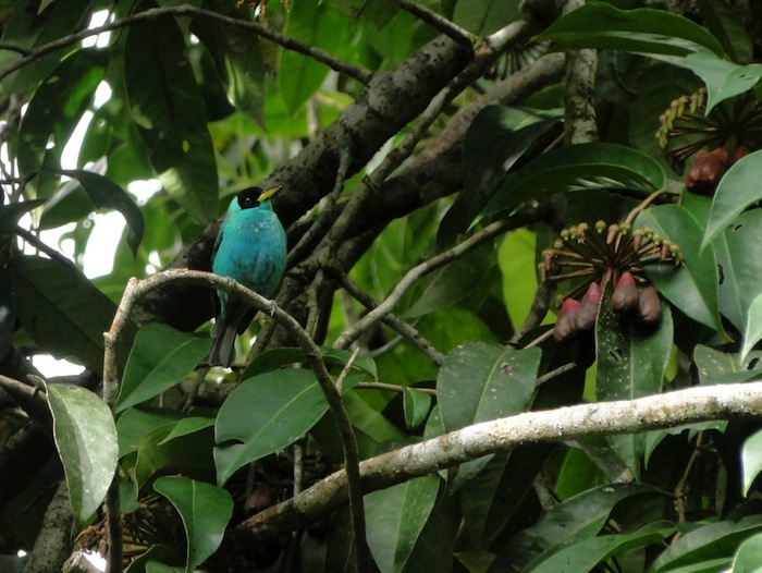 Preserving the forest is the mission of La Reserva Forest Foundation in Costa Rica