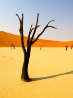 Namibia-Desert-Desertification-Global_warming-Namib_Desert