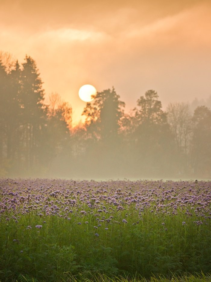Developing a sense of deep gratitude for our natural environment may be the best means of spurring the required action to live within its boundaries