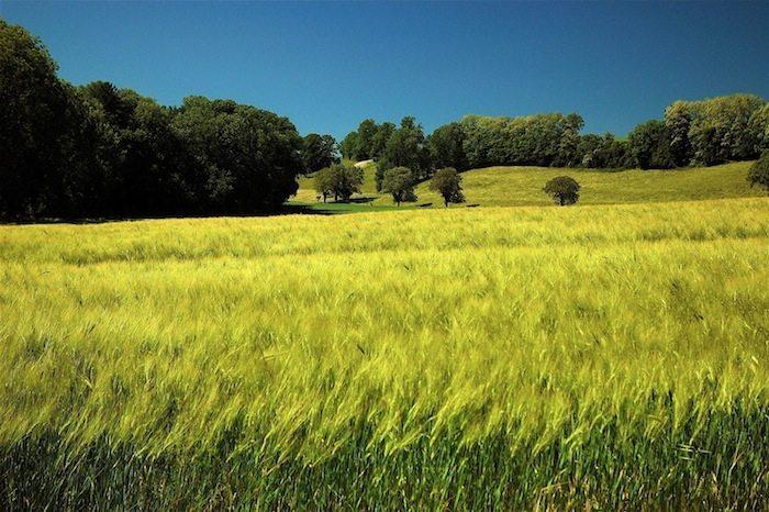 perennial-crops-geoengineering