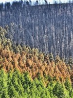 forest-after-fire-sun-valley