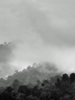 New research suggests a controversial theory for forests as rainmakers