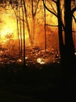By throwing the planet's climate out of whack, global warming is likely to cause more extreme weather events -- and not just rain, snow and flooding but more droughts and wildfires, too, sometimes within the same regions that at other times experience extreme wet weather.