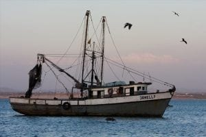 Are Hawaii's fishermen the scapegoats over environmental problems of which they have no control?