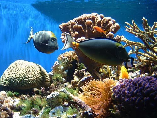 essay on global warming effects on fish