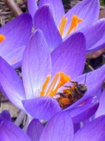 The sudden collapse of bee populations threatens our food supply. Find out what you can do to help raise awareness of this urgent and serious problem