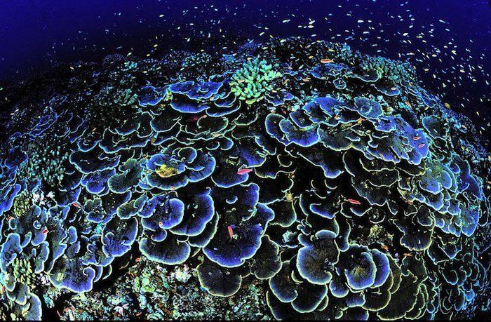 coral reef destruction essay about myself