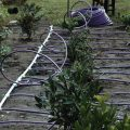 netafim-drip-irrigation