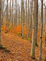 michigan-forest-conservation