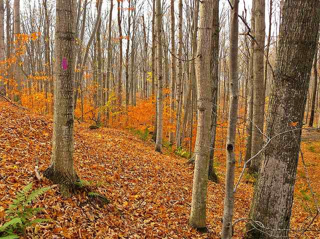 essay highlighting the necessity of the conservation of forests Essay on forests in hindi अर्थात इस environment and trees, environment conservation essay in merits of trees, necessity of tree.