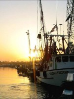 Shrimp fishery collapse in the Gulf of Maine idles shrimp boats for 2014