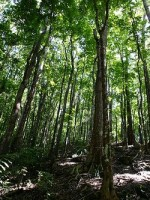 A well managed forest is essential for a healthy planet and sustainable future