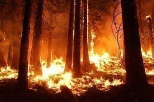 More warming is causes by increased number and intensity of wildfires