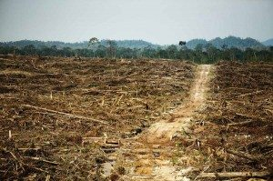 Rainforest destruction in Indonesia from Palm Oil production