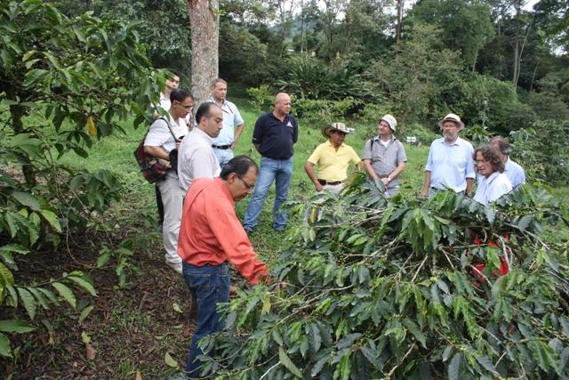 scientists studying the coffee genome work to prevent coffee leaf rust