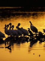 Climate change and fossil fuel use is among the most deadly factors for bird populations