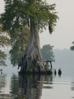 The Great Dismal Swamp National Wildlife Refuge in Virginia