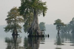 The Great Dismal Swamp National Wildlife Refuge in Virginia