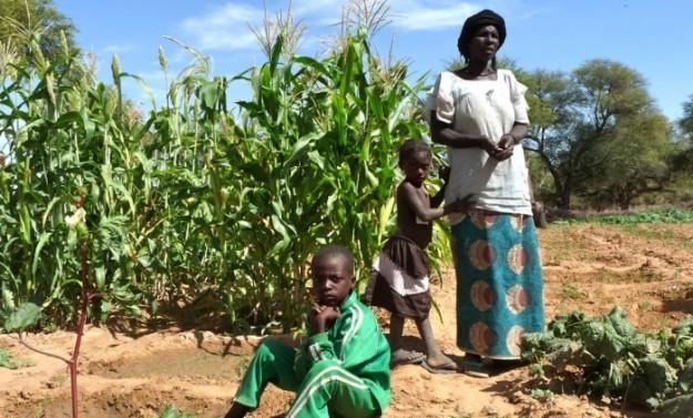 Corn farmer in Africa