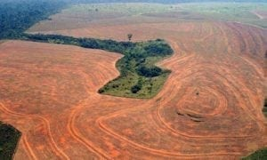 Deforestation in the Amazon, Brazil