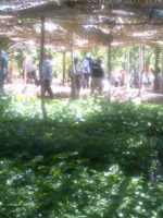 1-12-15_smallholder_farmers_alliance_haiti
