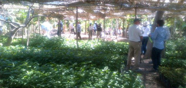 Smallholder Farmers Alliance, Haiti