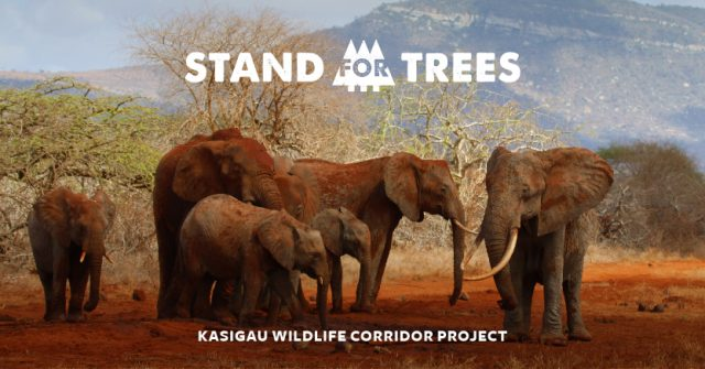Stand for Trees Kasigau