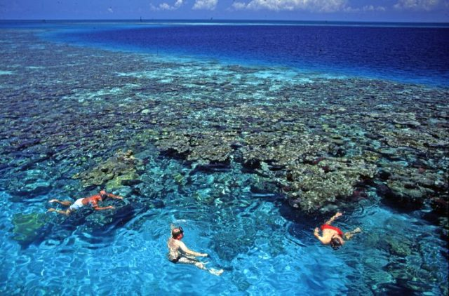 Mesoamerican Barrier Reef System - Biodiversity