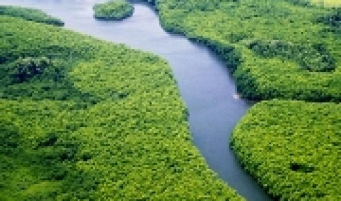 Mangrove conservation: a call to action