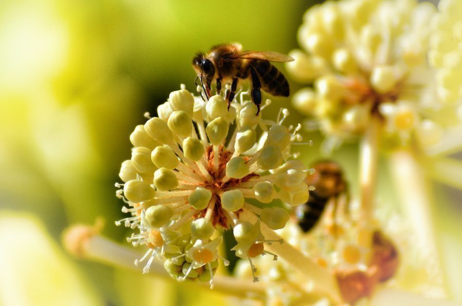 Bio-based chemicals could help reduce bee mortality