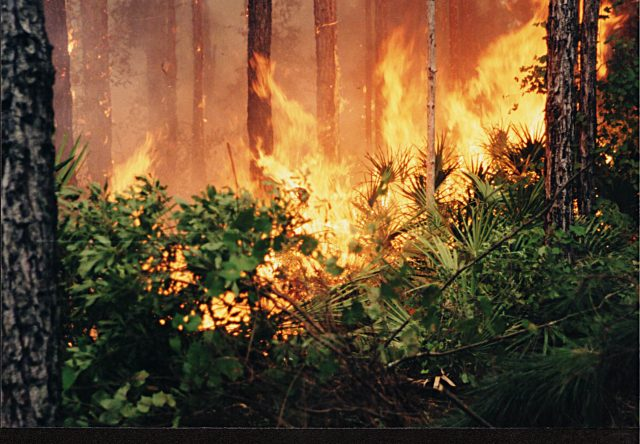 Wildfires, conservation and controlled burns in a warming climate