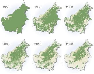 Borneo forest cover decline: 1950-2020