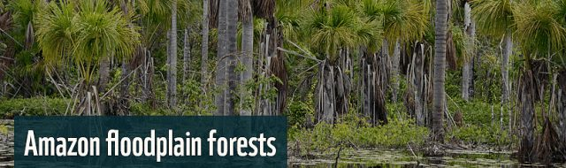 Amazon floodplain forests and methane emissions