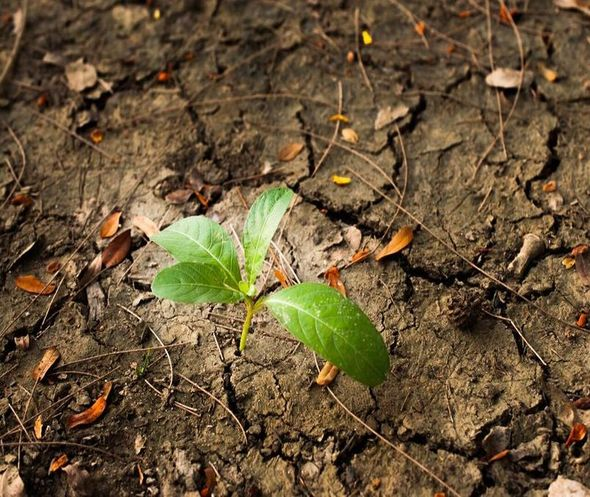 Forty Percent of World Population Threatened by Ongoing Land Degradation