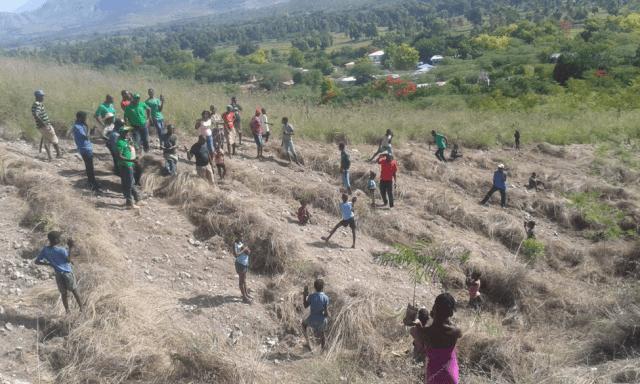Tree currency in Haiti